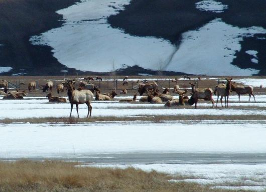 elk refuge sleigh ride jackson hole wy