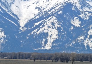 bison and mtns spring
